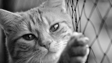 gato_tigre.jpg