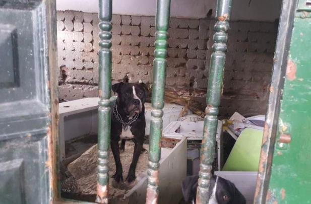 perros encerrados Algeciras.png